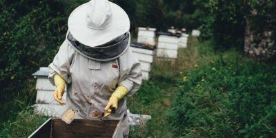 Dove nasce il migliore veleno d'api: la purezza in natura